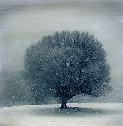021110_3436_split-toned-tree-in-field_600x585.jpg