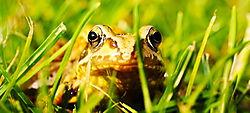 Frog5.jpg