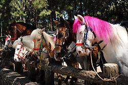 Los_caballos_Uno.jpg