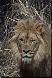 Akron_Zoo_32.jpg