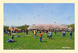 Smithsonian-KiteFlying-Day3.jpg