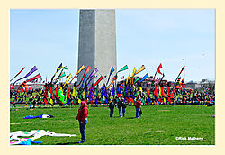 Smithsonian-KiteFlying-Day4.jpg