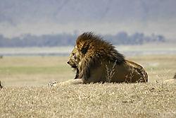 Safari_10.jpg