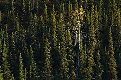 trees_4792-L.jpg