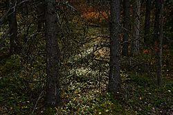 Forest-floor_5735m.jpg