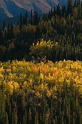 Hines-Creek_4917-m.jpg