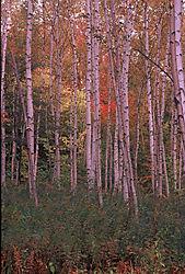200200-R1-E085_84.jpg
