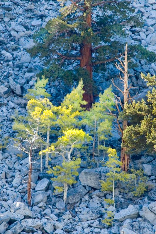 091016-Rock-Creek-Trees