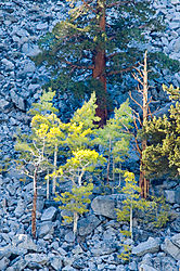 091016-Rock-Creek-Trees.jpg
