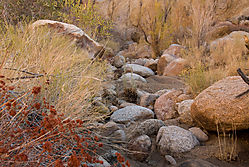 Eastern-Sierra-dry-creek1.jpg