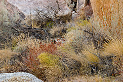 Eastern-Sierra-dry-creek2.jpg