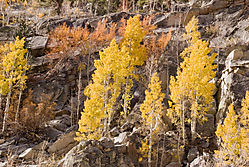 Eastern-Sierra_Bishop-Crk2.jpg
