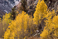 Eastern-Sierra_Bishop-Crk3.jpg