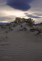 6_Death_Valley_Cornfield1.jpg