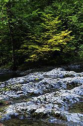 Silver_Falls_-_North_Park_2.jpg