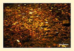 Leaves-Under-Water2.jpg