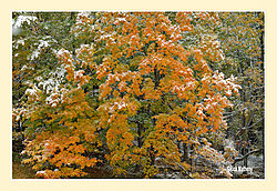 Mary-Edwards-Fall-Snow1.jpg