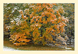 Mary-Edwards-Fall-Snow2.jpg