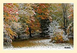 Mary-Edwards-Fall-Snow3.jpg