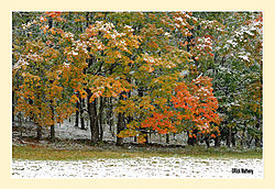 Mary-Edwards-Fall-Snow4.jpg