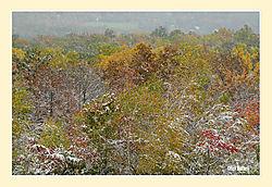 Mary-Edwards-Fall-Snow6.jpg