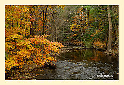 Salmon-Brook2.jpg
