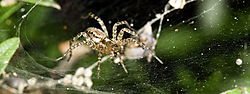 email_D3X_spider_macro_2_DSC_0023_1_of_1_.jpg
