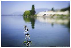 Fleurd_Ortie.jpg