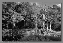 Beaver_Pond_Stony_Clove.jpg