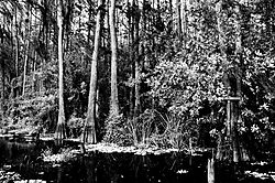 Everglades_cross.jpg