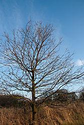 naked_trees-10.jpg
