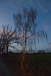 naked_trees-11-2.jpg