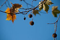 naked_trees-13.jpg