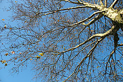 naked_trees-14.jpg