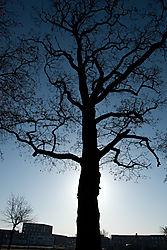 naked_trees-15.jpg