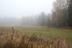 naked_trees-2.jpg