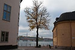 naked_trees-5.jpg