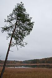 naked_trees-6.jpg