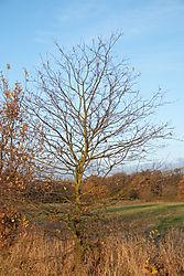 naked_trees-9.jpg