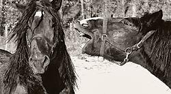 Pferde_small.jpg