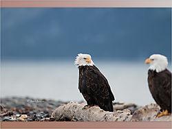 Eagle3-1.jpeg