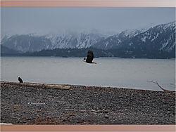 Eagle_10-1.jpeg