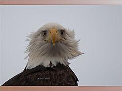 Eagle_11-1.jpeg