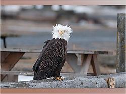 Eagle_5-1.jpeg