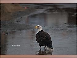 Eagle_7-1.jpeg