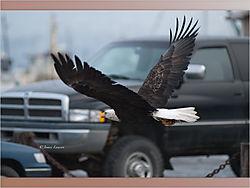 Eagle_8-1.jpeg