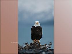 Eagle_9-1.jpeg