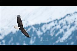 Soring_Eagle_2-1.jpeg