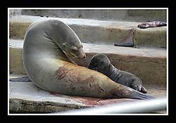 Zoo10015.jpg