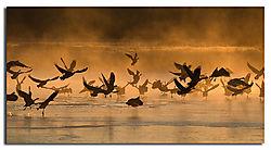 Geese_In_The_Mist_1020x5621.jpg